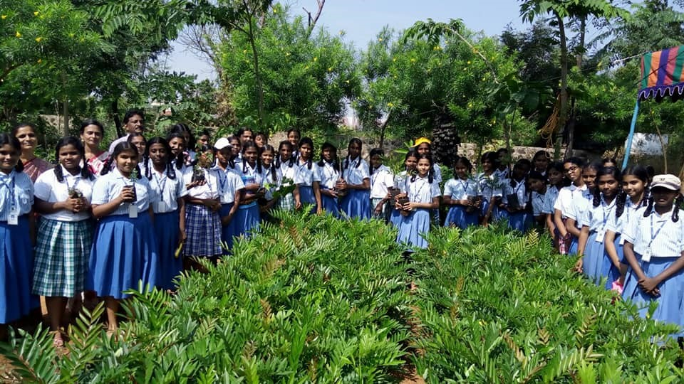 A photo from the Eco Tree Project showing saplings ready to be planted, school children gathered around to celebrate the initiative.
